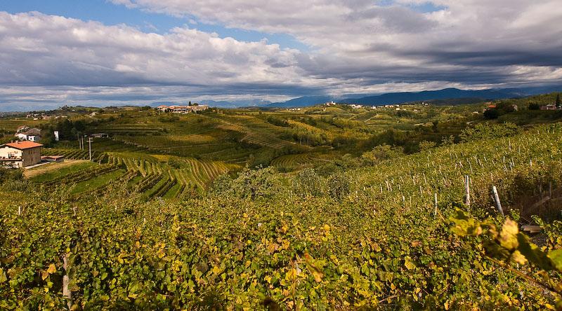 Вино Словении Брда
